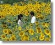 20051029_movie_ima_aini_yukumasu.jpg